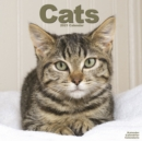 Cats 2021 wall Calendar - Book