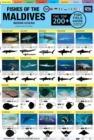 "Maldives Fish Field Guide ""Top 200+"" - Book"