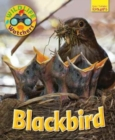 Wildlife Watchers: Blackbird - Book