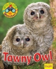Wildlife Watchers: Tawny Owl - Book