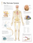 Nervous System Laminated Poster - Book