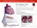 Healthy Heart : Life Size Anatomical Model - Book