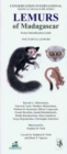 Lemurs of Madagascar: Nocturnal Lemurs : Pocket Identification Guide - Book
