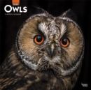 Owls 2020 Square Wall Calendar - Book