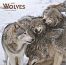 Wolves 2020 Square Wall Calendar - Book