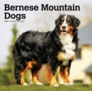 Bernese Mountain Dogs 2020 Square Wall Calendar - Book