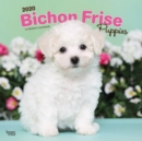Bichon Frise Puppies 2020 Square Wall Calendar - Book