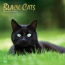 Black Cats 2020 Square Wall Calendar - Book