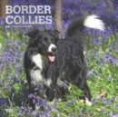 Border Collies 2020 Square Wall Calendar - Book