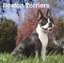 Boston Terriers 2020 Square Wall Calendar - Book