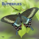 Butterflies 2020 Square Wall Calendar - Book
