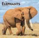 Elephants 2020 Square Wall Calendar - Book