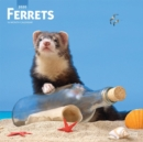Ferrets 2020 Square Wall Calendar - Book