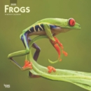 Frogs 2020 Square Wall Calendar - Book