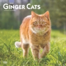 Ginger Cats 2020 Square Wall Calendar - Book