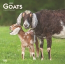 Goats 2020 Square Wall Calendar - Book