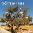 Goats in Trees 2020 Square Wall Calendar - Book