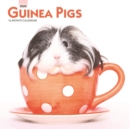 Guinea Pigs 2020 Mini Wall Calendar - Book