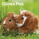 Guinea Pigs 2020 Square Wall Calendar - Book