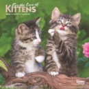 Kittens, for the Love of 2020 Mini Wall Calendar - Book
