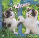 Kittens, I Love 2020 Square Wall Calendar - Book