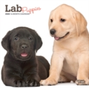 Lab Puppies 2020 Mini Wall Calendar - Book