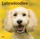 Labradoodles 2020 Square Wall Calendar - Book