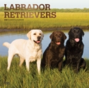Labrador Retrievers 2020 Square Wall Calendar - Book