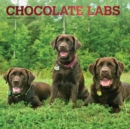 Labrador Retrievers, Chocolate 2020 Square Wall Calendar - Book
