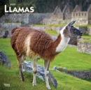 Llamas 2020 Square Wall Calendar - Book