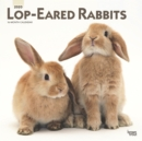 Lop Eared Rabbits 2020 Square Wall Calendar - Book