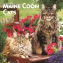 Maine Coon Cats 2020 Square Wall Calendar - Book