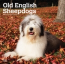 Old English Sheepdogs 2020 Square Wall Calendar - Book
