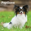 Papillons 2020 Square Wall Calendar - Book