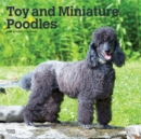 Poodles, Toy and Miniature 2020 Square Wall Calendar - Book