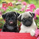Pug Puppies 2020 Square Wall Calendar - Book