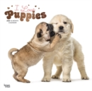 Puppies, I Love 2020 Square Wall Calendar - Book