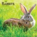 Rabbits 2020 Square Wall Calendar - Book