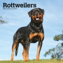 Rottweilers 2020 Square Wall Calendar - Book
