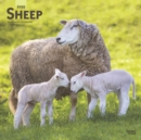 Sheep 2020 Square Wall Calendar - Book