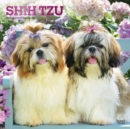 Shih Tzu 2020 Square Wall Calendar - Book