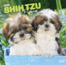Shih Tzu Puppies 2020 Square Wall Calendar - Book