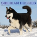 Siberian Huskies 2020 Square Wall Calendar - Book