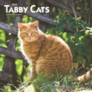 Tabby Cats 2020 Square Wall Calendar - Book