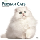 Persian Cats 2020 Square Wall Calendar - Book