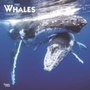 Whales 2020 Square Wall Calendar - Book