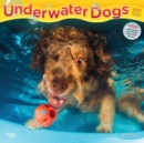 Underwater Dogs 2020 Square Wall Calendar - Book
