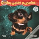 Underwater Puppies 2020 Mini Wall Calendar - Book