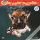 Underwater Puppies 2020 Square Wall Calendar - Book