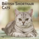 British Shorthair Cats 2020 Square Wall Calendar - Book